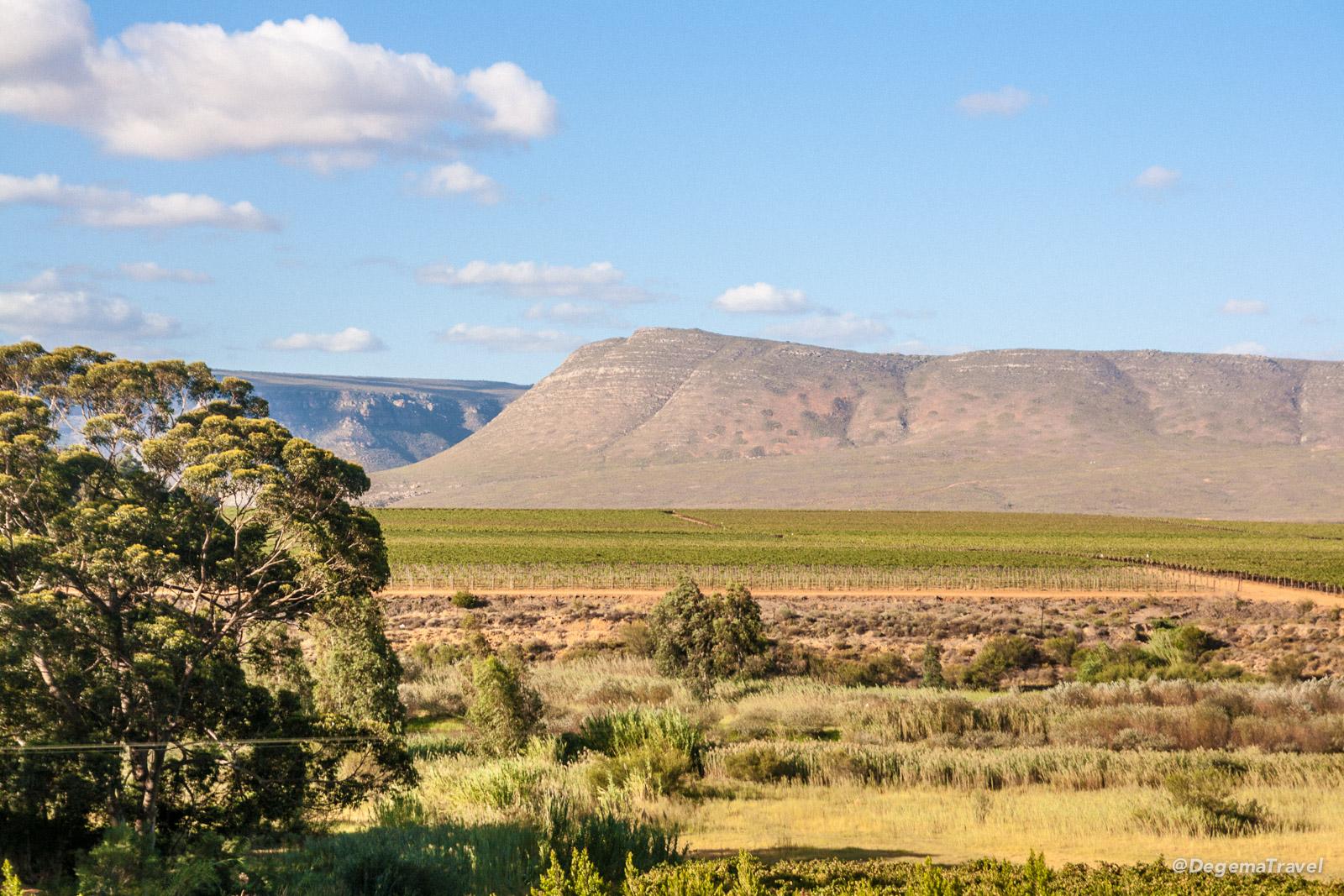 Highlander Vineyard, South Africa