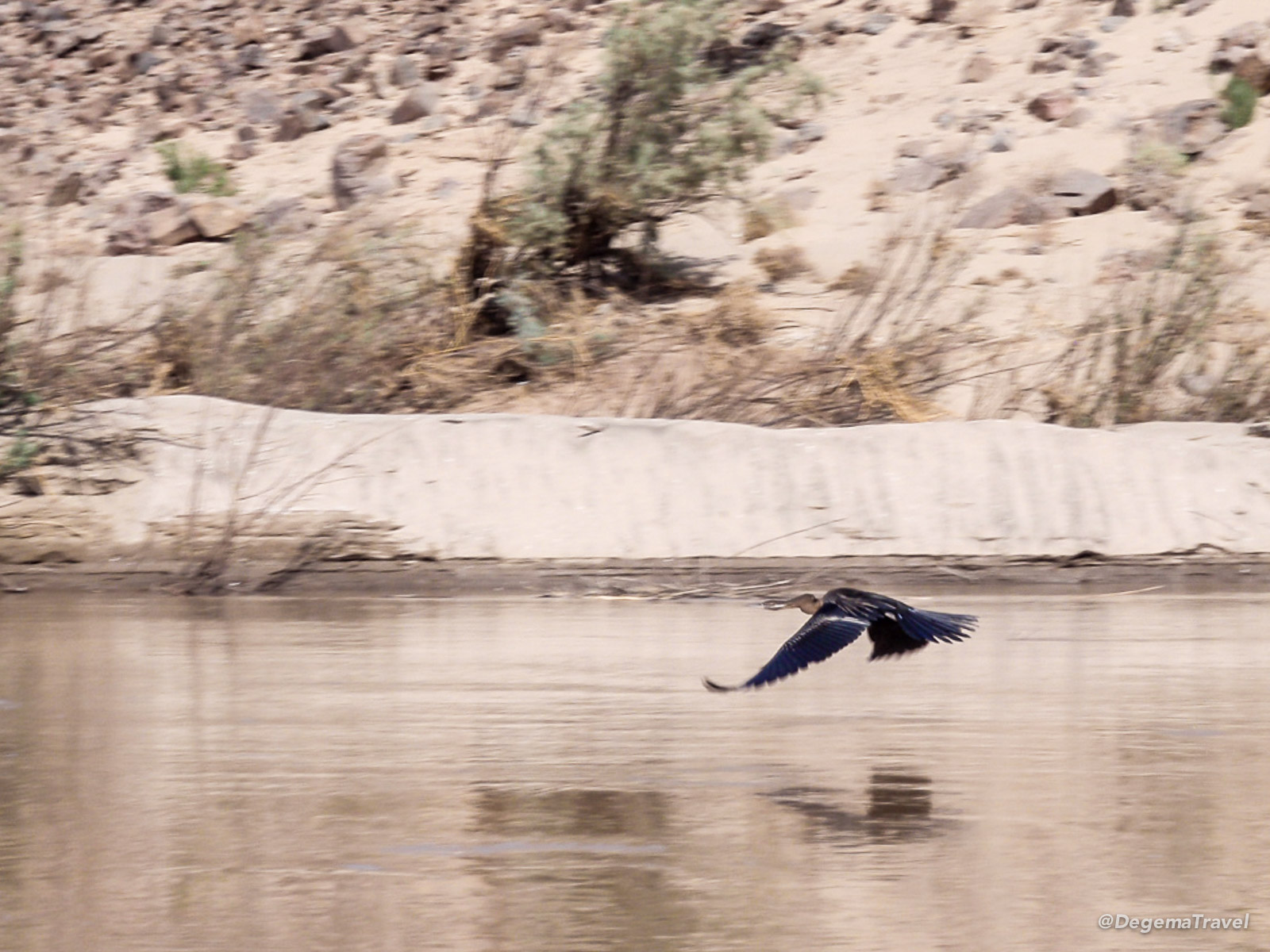 A bird swooping over the Orange River, Namibia