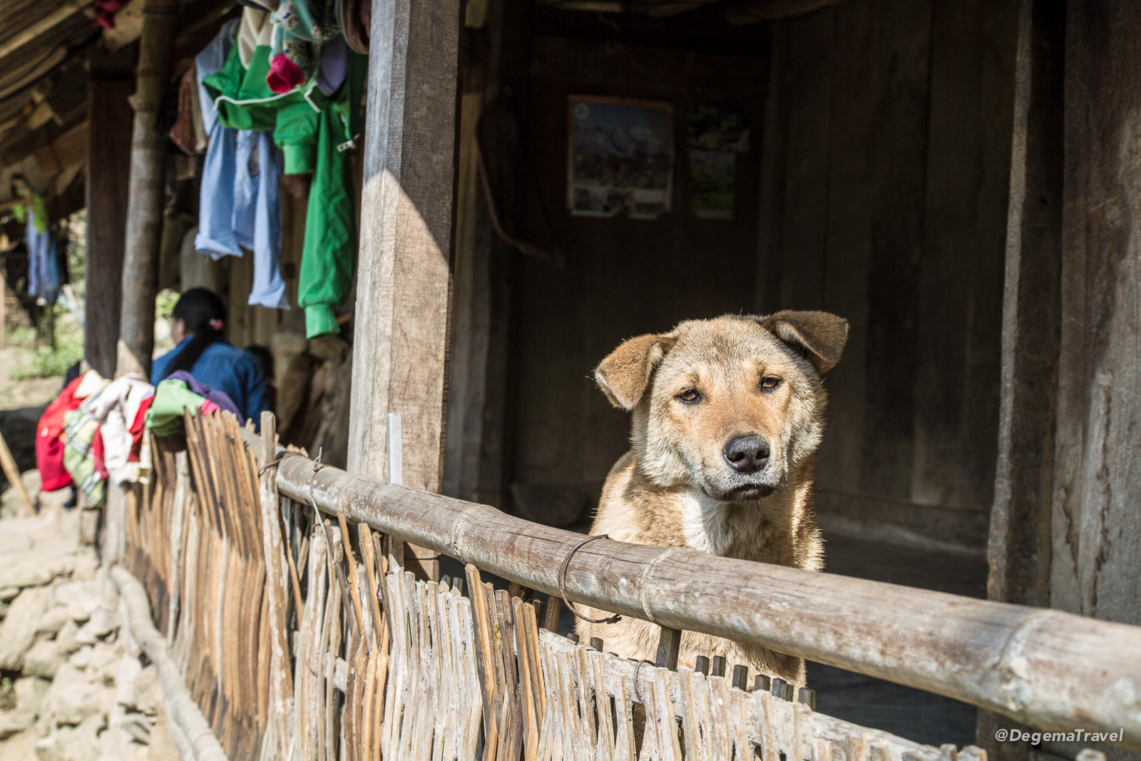 A dog in the Mường Hoa Valley near Sapa, Vietnam