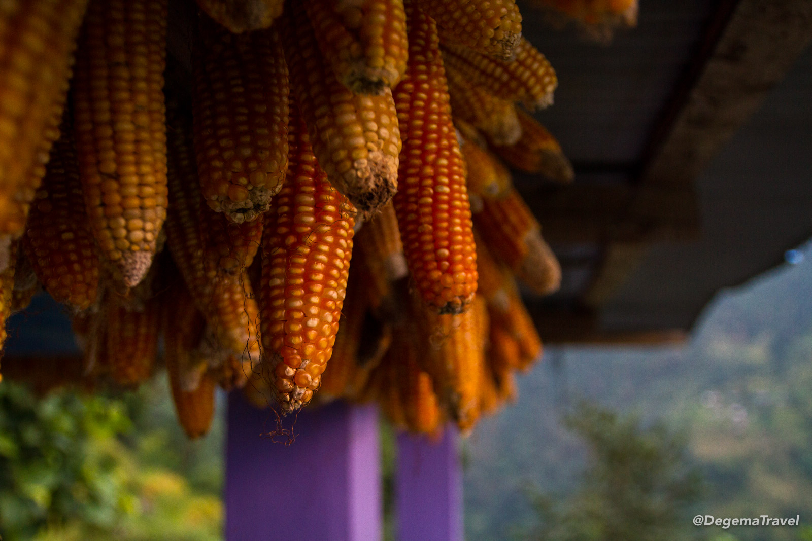 Corn hung out to dry at a teahouse in the Annapurna Conservation Area near Ulleri, Nepal