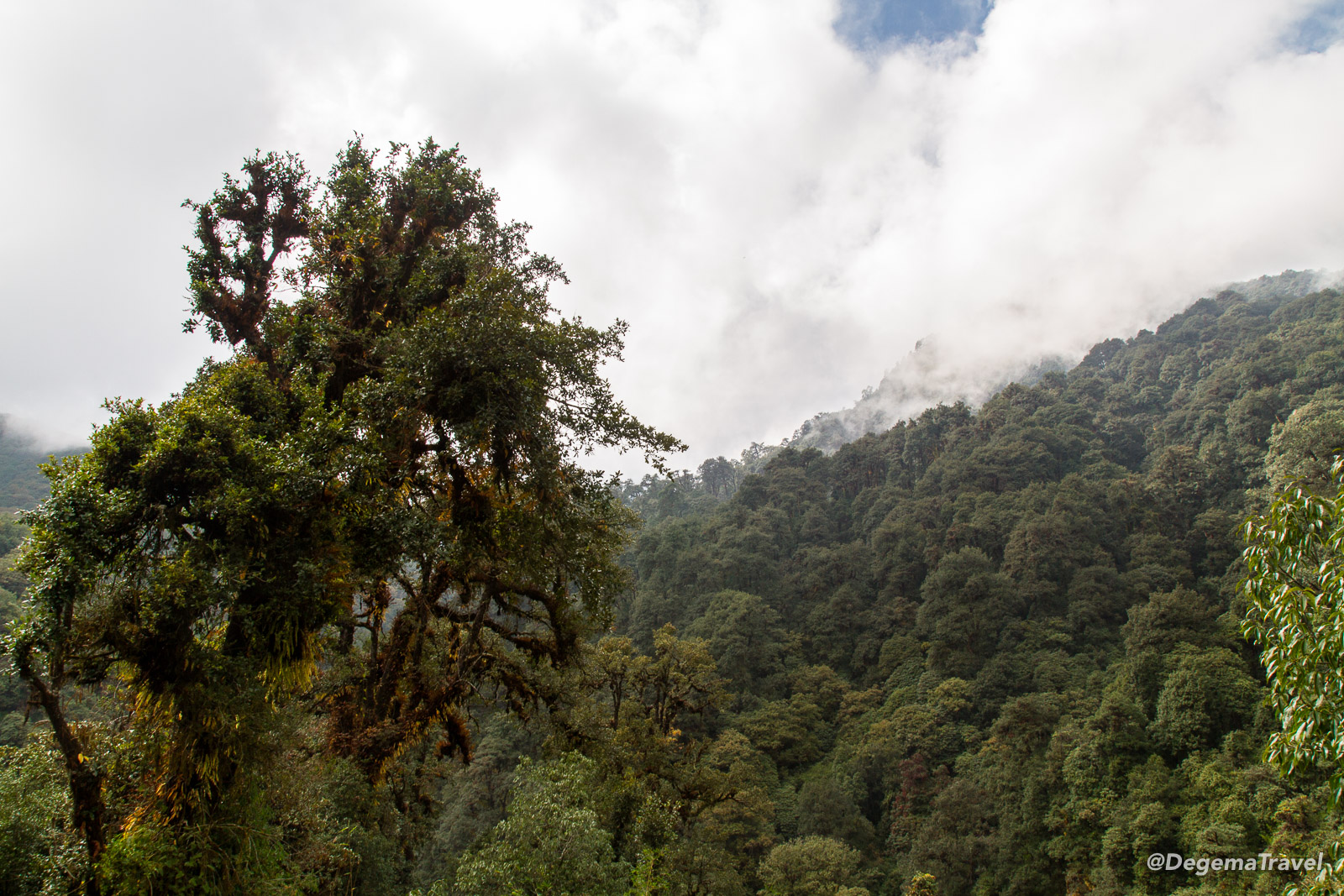 The view along the path towards Ghorepani in the Annapurna Conservation Area, Nepal